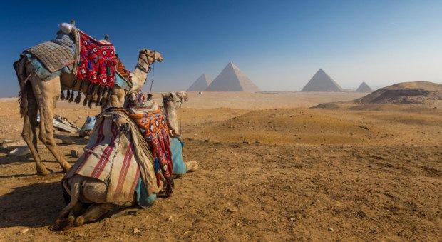 Верблюды в пустыне на фоне пирамид