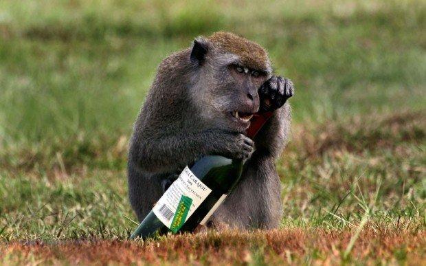 Обезьяна с бутылкой вина