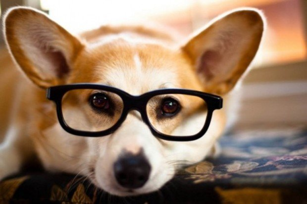 Пёс в очках