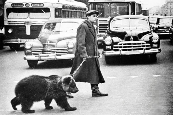 Выгул медведя