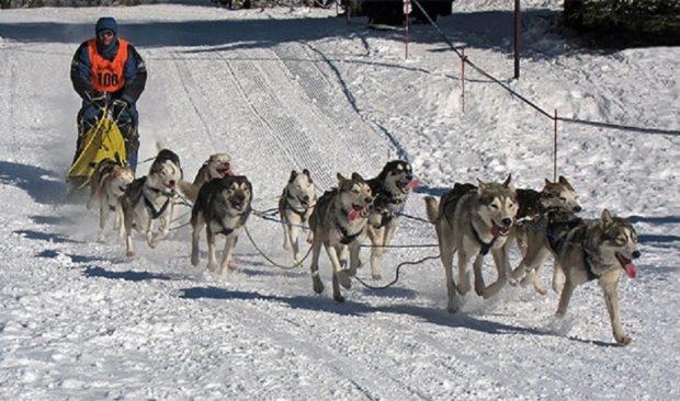 Аляска и её собаки