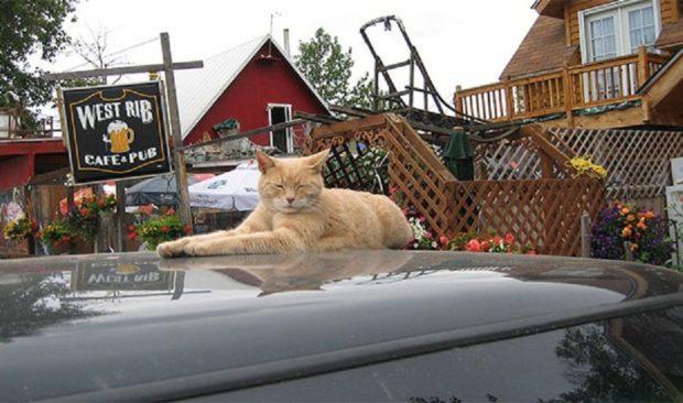 Аляска и кот Стаббс
