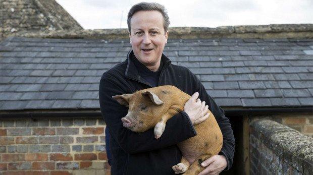 Дэвид Кэмерон и свинка