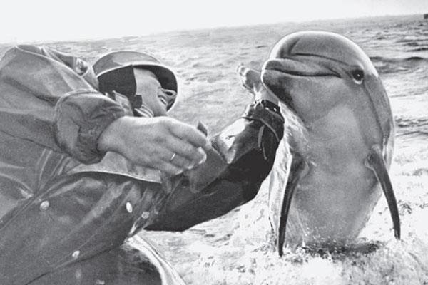 Дельфин с военным тренером