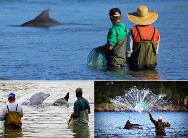Дельфины и рыбаки