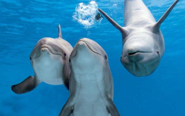 Защитный окрас дельфинов