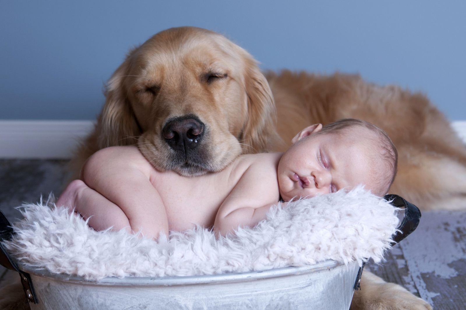 Картинки животные красивые для детей, прикольные