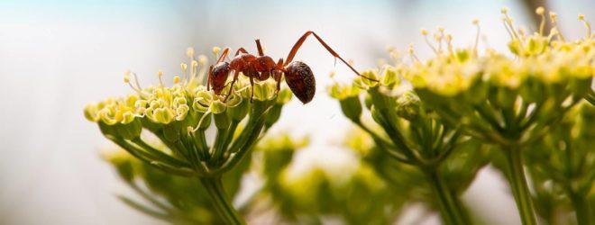 5 удивительных способов, которыми растения защищаются от нас