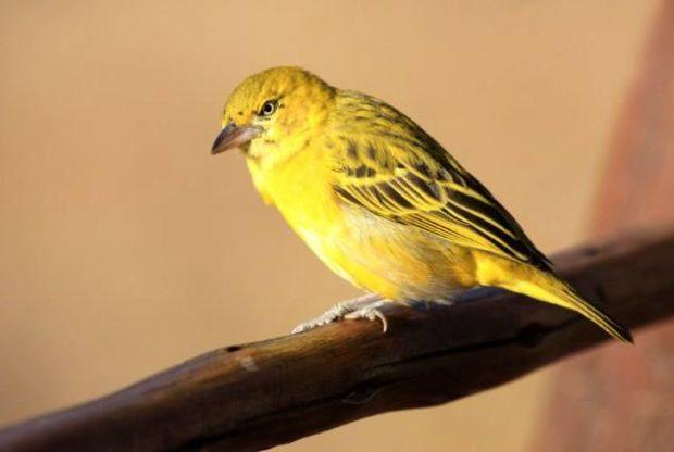 Современная птица