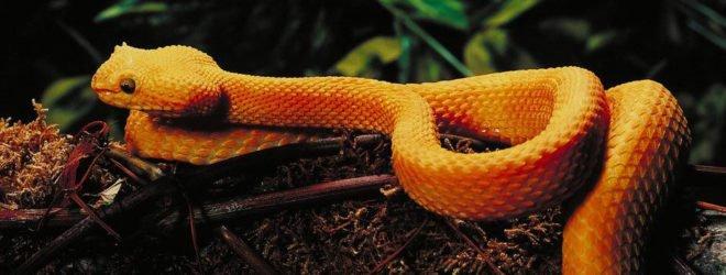 11самых странных и необычных змей
