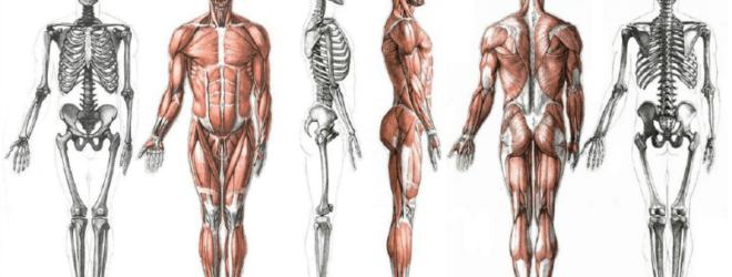 17 частей тела, названия которых вы могли не знать