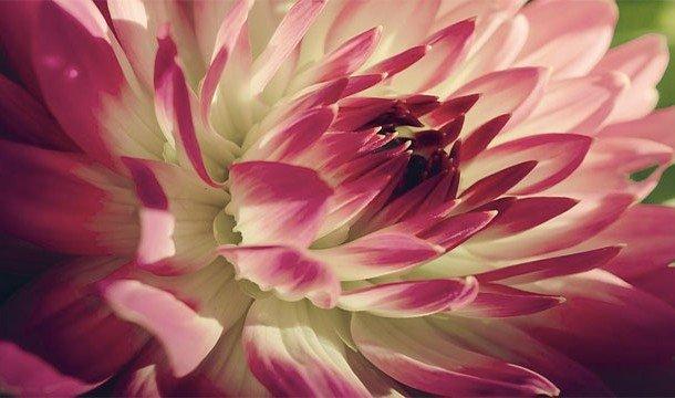 Цветы-меломаны