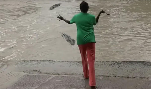Женщина пугает крокодила тапками