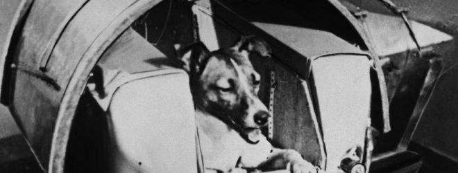 10 фактов о Лайке, первой собаке в космосе