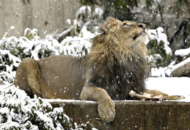 Смитсоновский национальный зоологический парк, Вашингтон, округ Колумбия, США