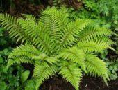 10 удивительных исчезнувших видов растений