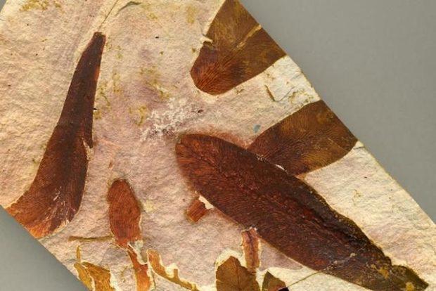 Glossopteris — 245 миллионов лет назад (Южное полушарие)