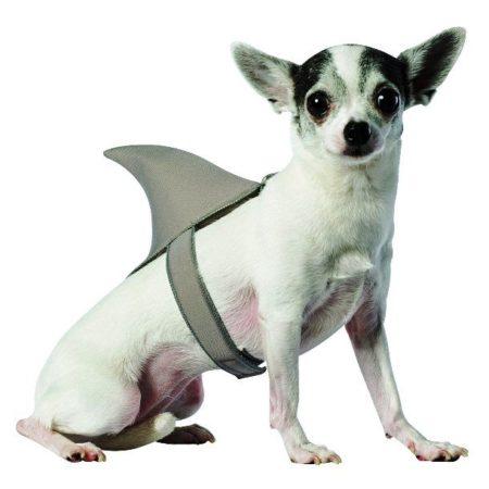 Чихуа-хуа с накладным акульим плавником