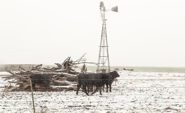 Зима 1904 года в Техасе