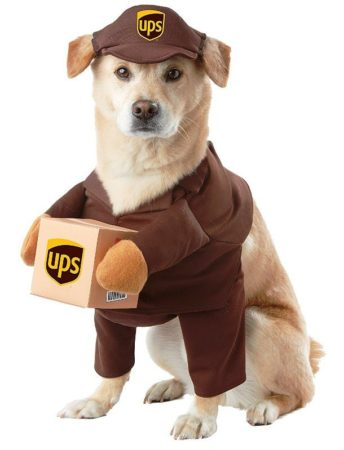 Собака в костюме курьера UPS