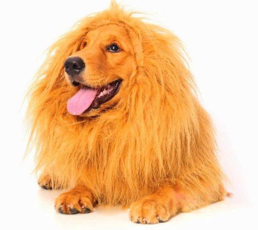 Собака в накидке в виде львиной гривы