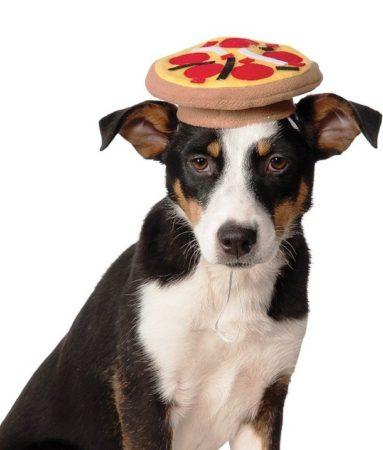 Собака с шапочкой в виде пиццы