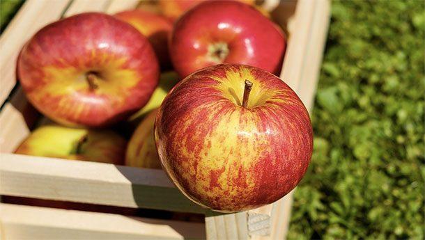 Яблочные семена