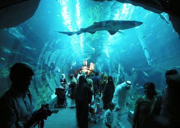 Аквариум Дубай, ОАЭ