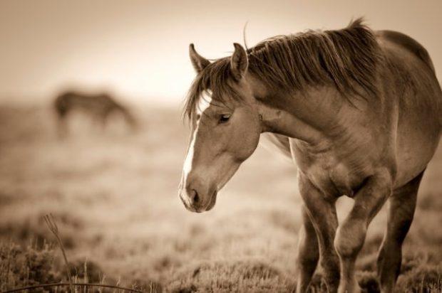 Кража лошади