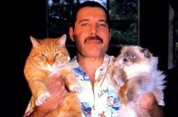Фредди со своими котами
