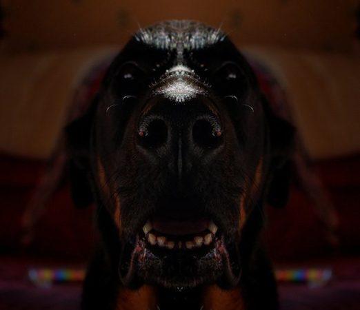 Мальчик-пёс