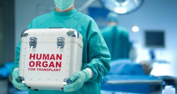 Медработник держит контейнер для донорских органов