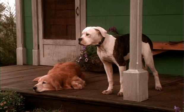 Список лучших фильмов про животных