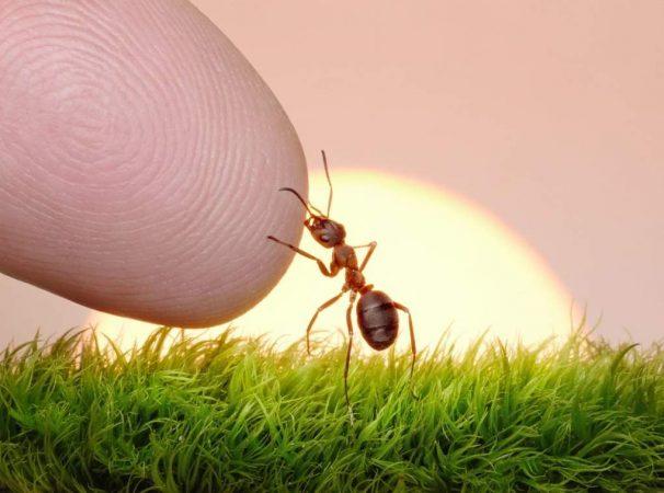 Ловец муравьев