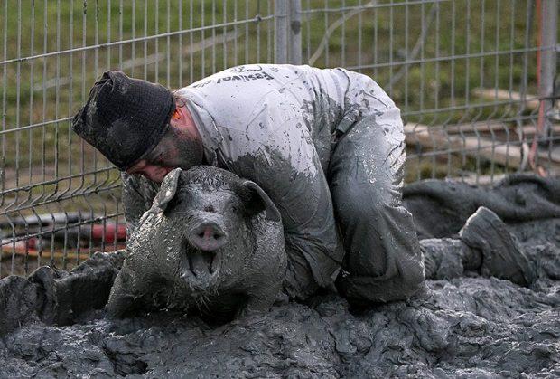 Глупая идея — выяснять отношения со свиньёй