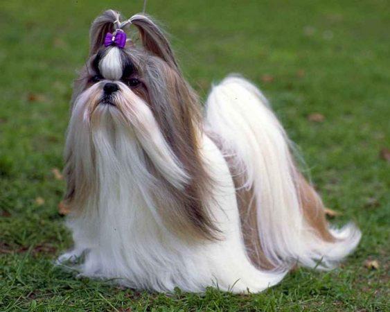 самые глупые собаки в мире