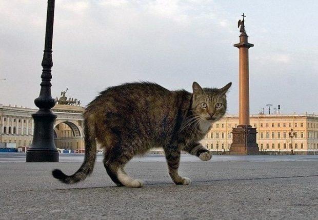 Всемирный день петербургских котов