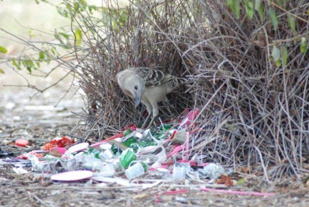 Птица с кучей мусора