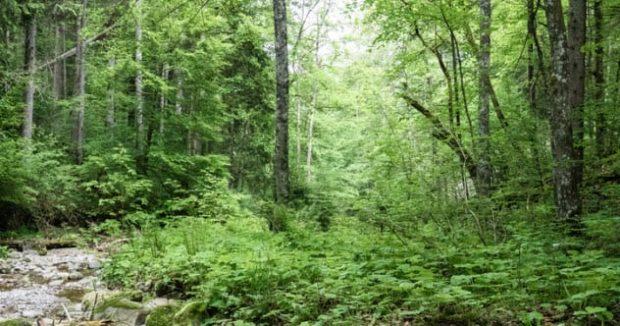 А может она прячется в чаще леса