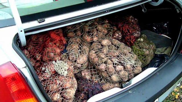 Картофель в багажнике