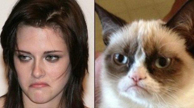Недовольная Кристен Стюарт и сердитая кошка