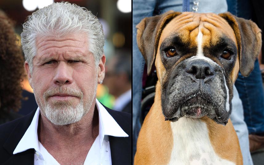 Актеры похожие на животных картинки