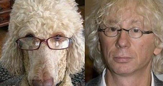 Белый пудель в очках и Укупник
