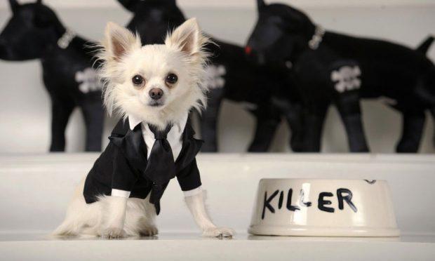 Собака в элегантном костюме с галстуков