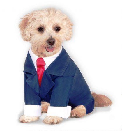 Пёсик в красивом синем костюме с красным галстуком