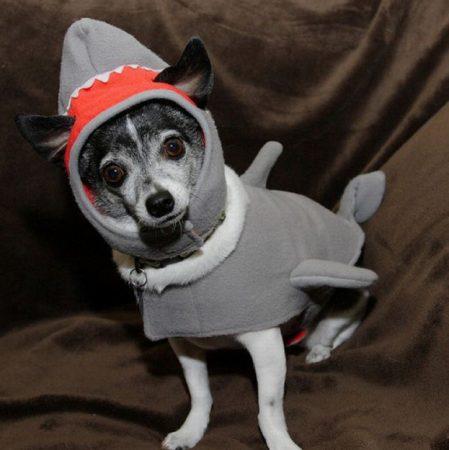 Собака в костюме акулы