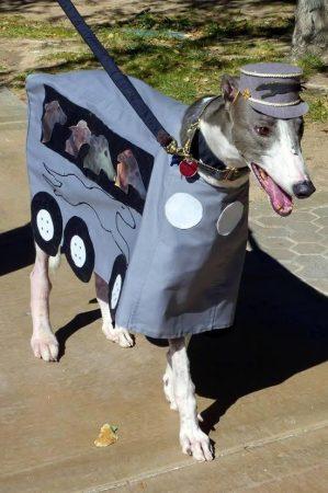 Собака в костюме в виде автомобиля