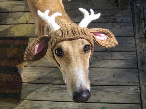 Собака в костюме оленя