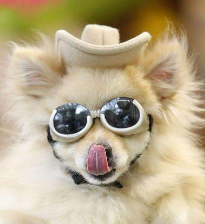 Собачка в очках и фетровой шляпе