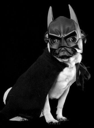 Пёс в костюме Бэтмена